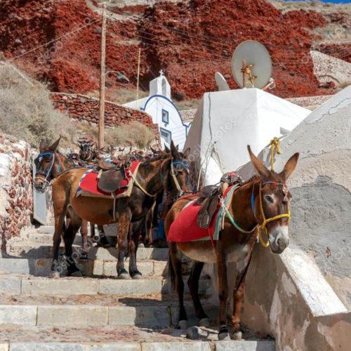 Η  0008 Depositphotos 116634408 Stock Photo Donkeys For Horse Riding In